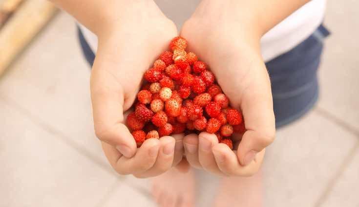 Los frutos rojos te ayudarán en tu propósito