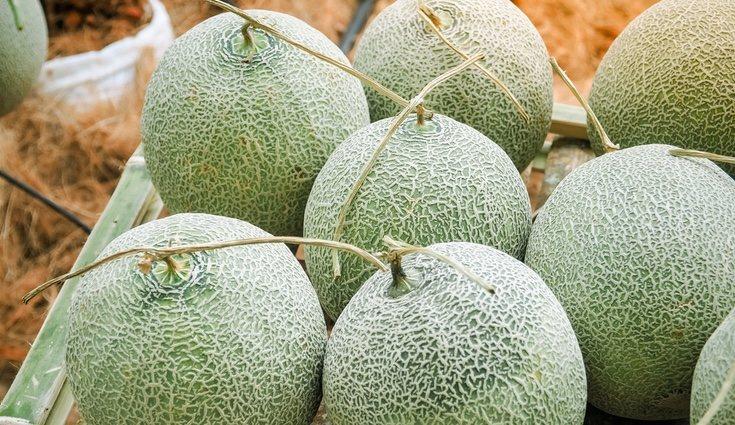 El melón ayuda a regenerar nuestra piel y eliminar manchas
