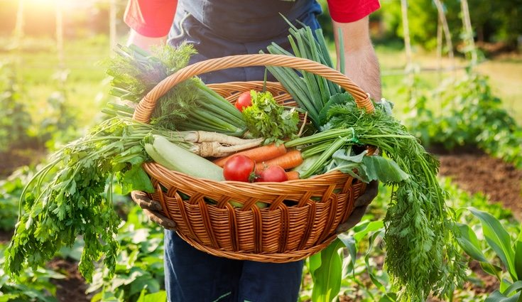 Las verduras crudas conservan las vitaminas, minerales y la fibra