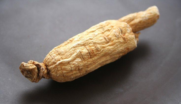 La raíz del euterococo es lo único que se aprovecha de esta planta