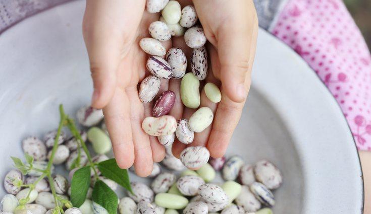 Las legumbres, al ser ricas en hidratos de carbono complejos, tienen un alto poder saciante