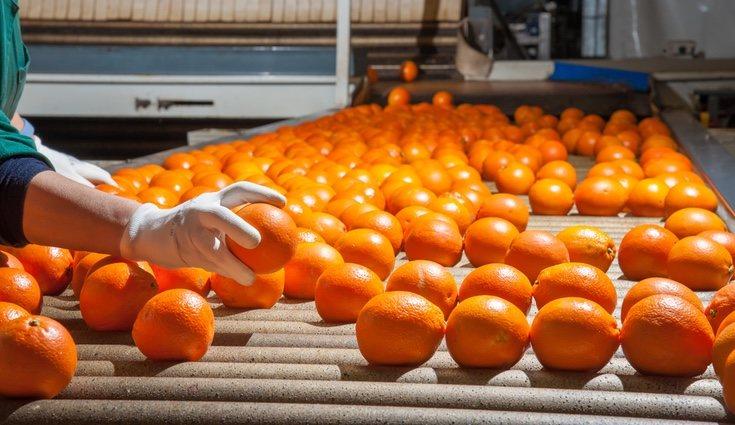 La naranja es uno de los cítricos más recurridos, sobre todo en el desayuno