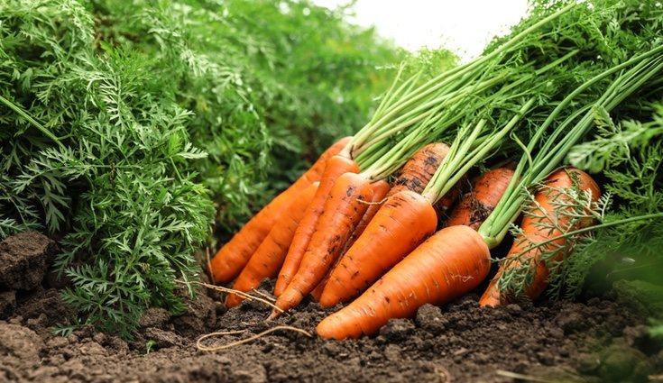 Las verduras crudas pueden ser el snack más saludable para comer entre horas