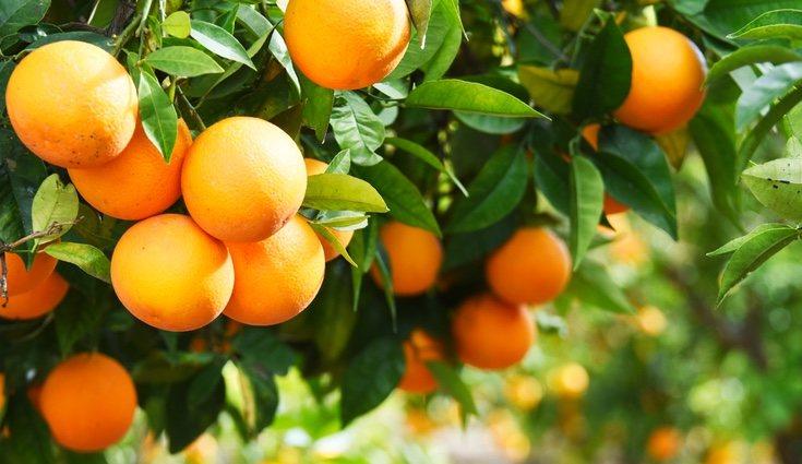 El vino, el brócoli, las naranjas o la uva son algunos de los flavonoides